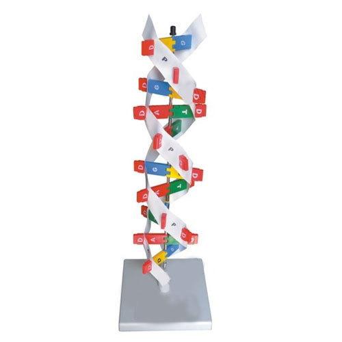 مدل DNA