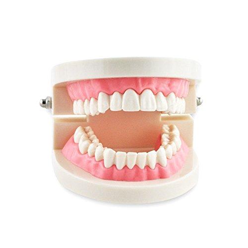 مولاژ فک و دندان