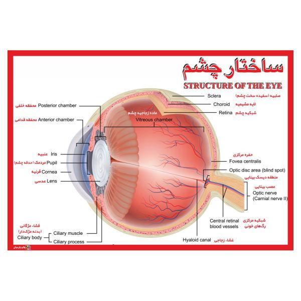 پوستر آموزشی ساختمان چشم